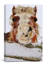 Happy Horse, Canvas Print