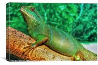 Chinese Water Dragon, Canvas Print