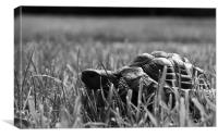 Tortoise in the Grass, Canvas Print
