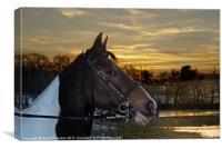 Horse Standing Alert, Canvas Print