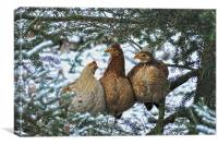 Three French Hens, Canvas Print