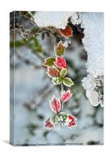 Red & Green Winter Scene, Canvas Print