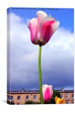 Glasgow Tulip, Canvas Print