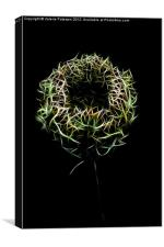 Christmas Flower, Canvas Print
