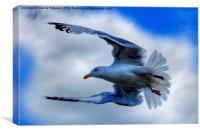 Seagull, Canvas Print