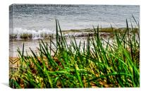 Aberdeen Sand Dunes, Canvas Print