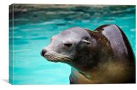Sealion , Canvas Print