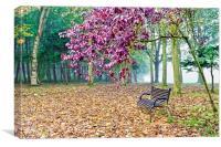 Autumn Colour in the Park , Canvas Print