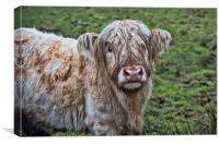 Highland Cow, Canvas Print