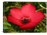 Red Wild Flower, Canvas Print