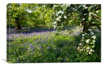 Bluebells and may, Canvas Print
