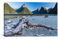 Beached tree trunk Milford Sound, Canvas Print