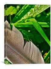 Feather & Grass, Canvas Print