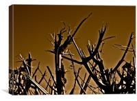 Twigs n Sticks, Canvas Print