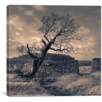 Leaning Tree, Bradgate Park, Canvas Print