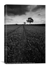 Silhouetted Tree, Canvas Print