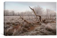 Fallen tree in hoar frost, Canvas Print