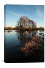 Sunlit reeds and reflected trees, Canvas Print