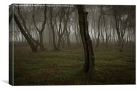 Birch trees in late afternoon mist, Stanton Moor, Canvas Print