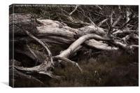 Fallen Trees, Canvas Print