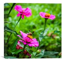 Bee on the flower, Canvas Print