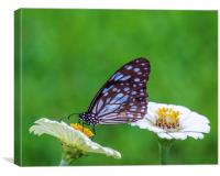 Brown Butterfly on the Yellow Flower, Canvas Print