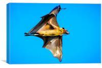 The Bat, Canvas Print