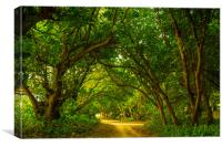 A narrow lane among the trees, Canvas Print