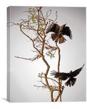 birds on tree, Canvas Print