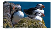 Isle of May Puffins, Canvas Print