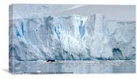 Antarctica Glacier breaks free, Canvas Print