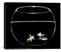 Three fish in a bowl, Canvas Print
