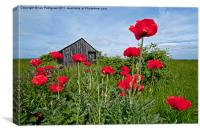 Poppy shed, Canvas Print