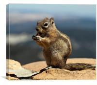 Ground squirrel from Utah., Canvas Print