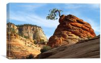 Rock and Tree. National park Zion. Utah, Canvas Print