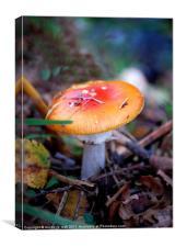little mushroom, Canvas Print