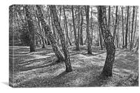 New forest trees and shadows, Canvas Print