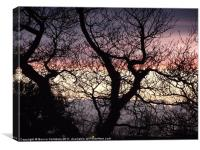 Branches, Canvas Print