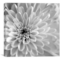 Tubular Flowers, Canvas Print