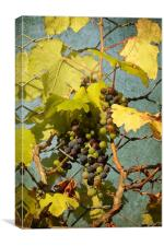 BUNCH OF GRAPES, Canvas Print