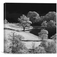 Frosty trees, Canvas Print