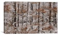Winter Larch, Canvas Print