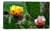 Fresh Cactus Flowers, Canvas Print