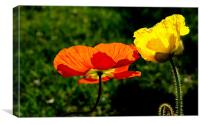 Two Poppies, Canvas Print