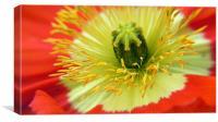 Poppy Close-up, Canvas Print