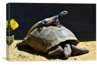 Lizard on a  turtle, Canvas Print