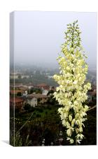 Young Yucca Flowers, Canvas Print