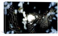 Spider Web in rain, Canvas Print