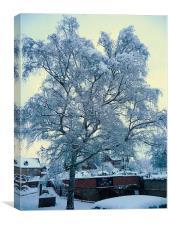 snow tree, Canvas Print