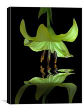 Reflected Lily, Canvas Print